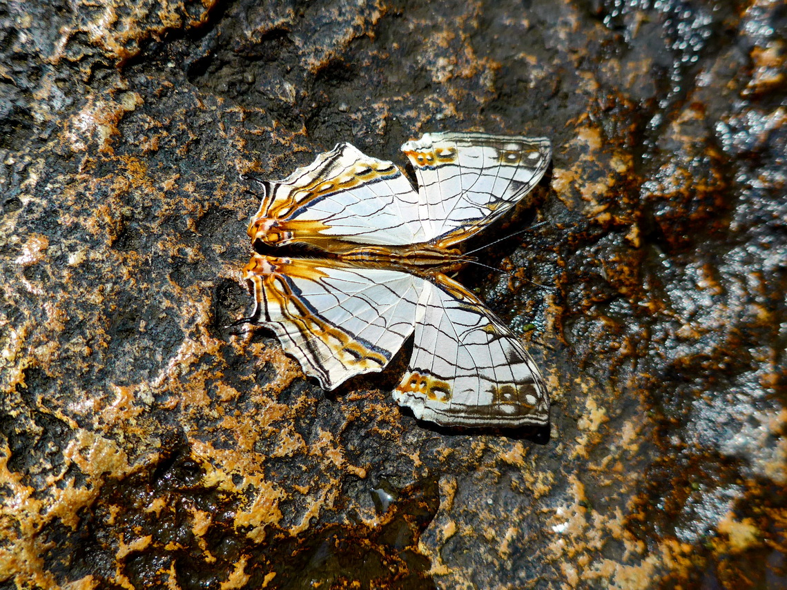 Butterfly on the rocks of the waterfall