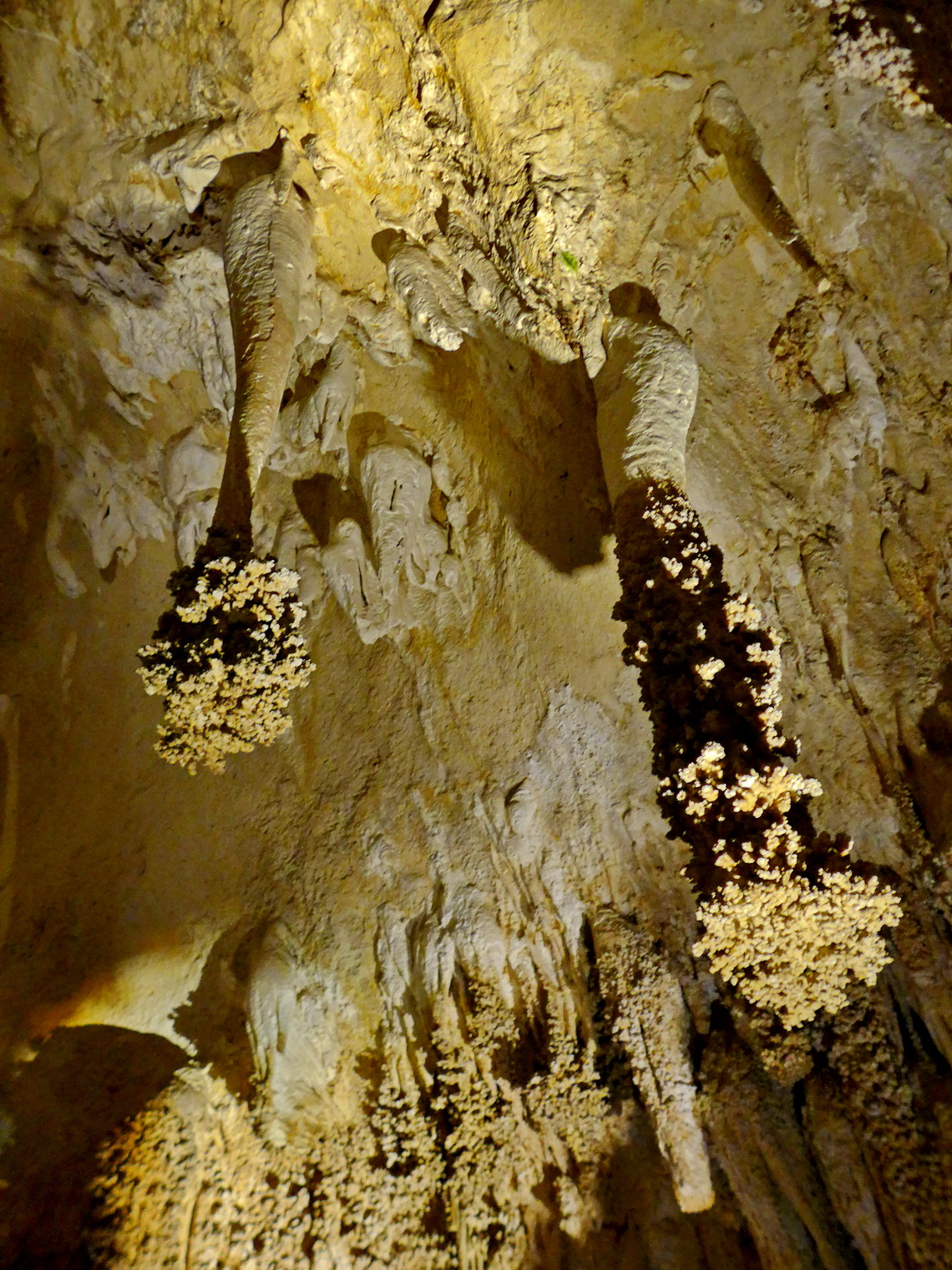 Lions Tails in the main cave