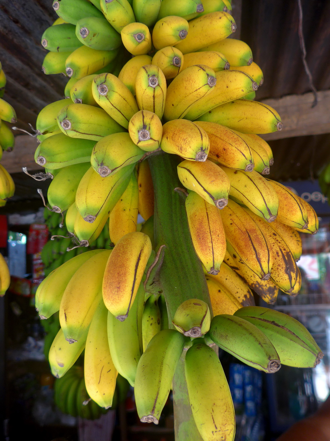 Bananas of tropical Union Juarez