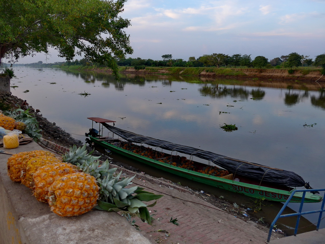 Pineapple cargo in Mompós with river Rio Magdalena