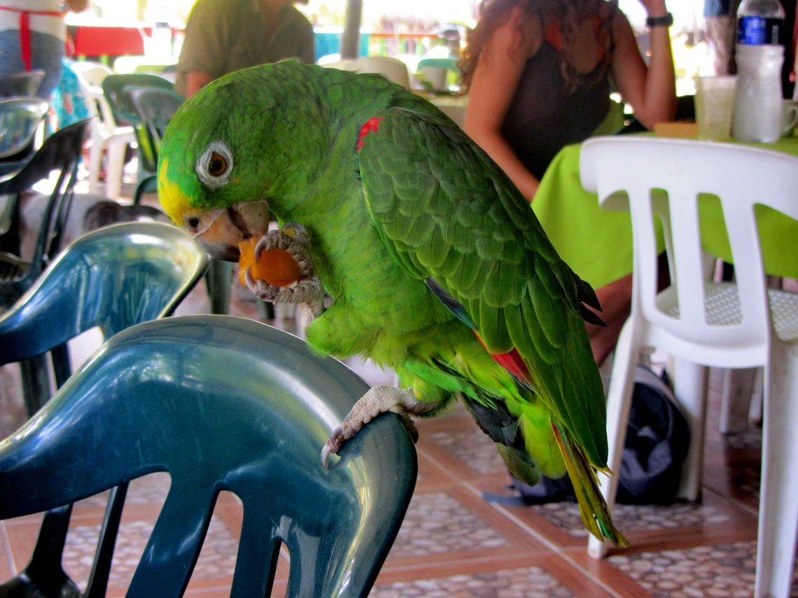 Hungry guest in a restaurant of Arrecifes
