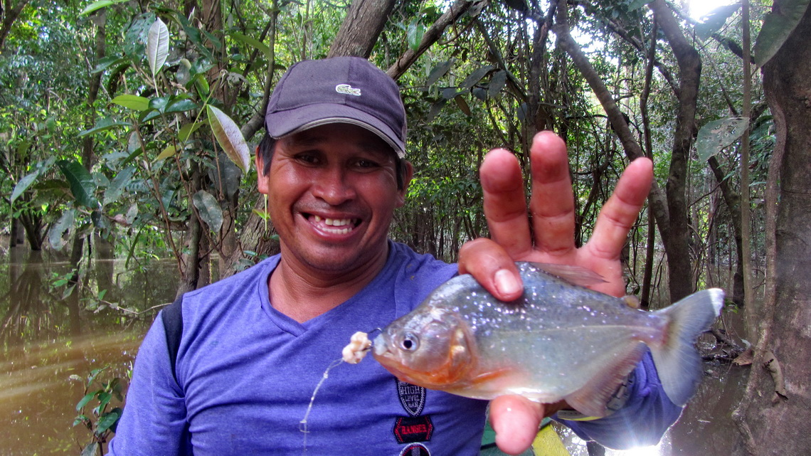 Ruben, our boatman with a piranha fished by himself
