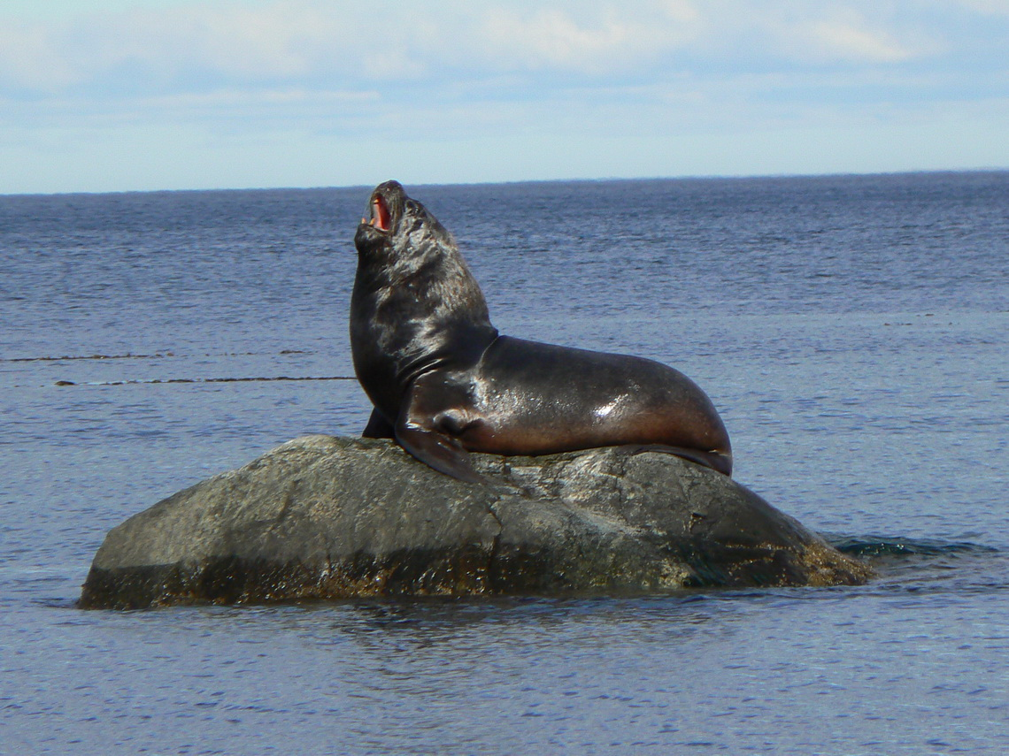 Sea Lion on the beach South of Punta Arenas