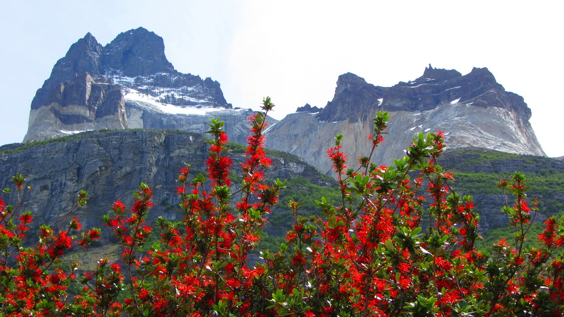 Cuernos with red Notro bushes