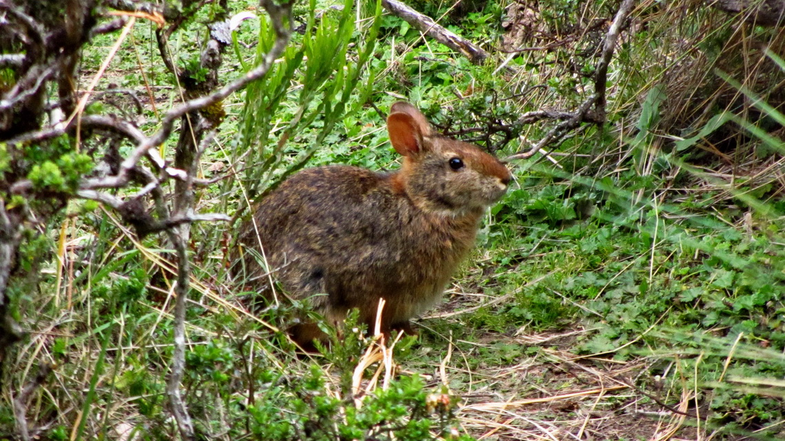 Rabbit like animal on our campsite Las Cuevas