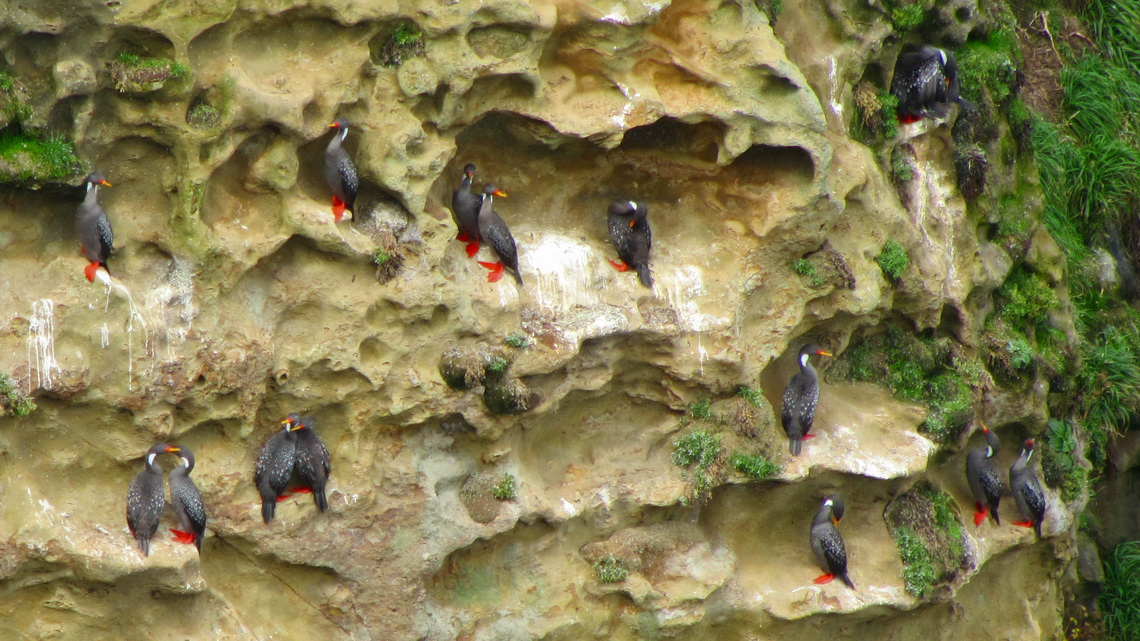 Cormorants seen from the viewpoint at the southern end of the trail